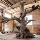 Mary Boone Gallery to Open New Ai WeiWei Exhibit ROOTS AND BRANCHES 11/5