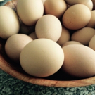BWW Blog: Micah Young - Counting Chickens