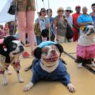 Take Fido on The Wonder Wheel for 2015 PET DAY at Coney Island, 5/30