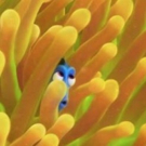 First Look - Ellen DeGeneres Reveals All-New FINDING DORY Poster