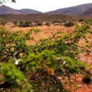 Smithsonian Channel Premieres New Series AFRICA'S WILD HAVENS  Tonight