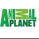 Animal Planet Premieres New Series DR. DEE: ALASKA VET Tonight