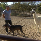 Jerry Seinfeld Guests on Season 3 Premiere of Nat Geo Wild's CESAR 911, 2/19