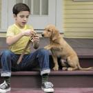 BWW Review: A DOG'S PURPOSE at Palace Nova Eastend Cinemas