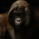 VIDEO: First Look - Meet Christopher Walken's 'King Louie' in Disney's THE JUNGLE BOOK