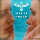 Electro Duo BluBird Release 'Fresh'; Take on Kool & The Gang's 80s Anthem