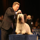 Photo: Skye Terrier Wins NATIONAL DOG SHOW's Best in Show