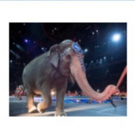 Ringling Bros. and Barnum & Bailey Traveling Elephants to Leave the Circus in May 2016