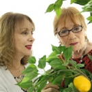 Scully Mansion Presents LEMON TREE, A Love Story Before Valentine's Day