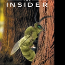 Beverly Blackman-Mounce Launches THE INSIDER