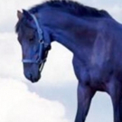 PB Photo Centre to Present A HORSE OF A DIFFERENT COLOR