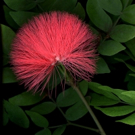 Laurie Tennent Botanicals Presents HIBERNA FLORES, 1/7-2/19