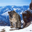 PLANET EARTH II Series Premiere to Air Across BBC America, AMC and SundanceTV, 2/18