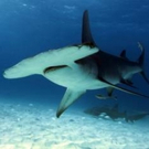 Smithsonian Channel to Present WILD WEDNESDAYS Featuring World's Deadliest Predators