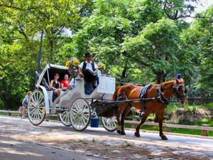 Afbeeldingsresultaat voor New York Carriage Trade
