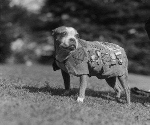 War Dog Musical 'SGT. STUBBY' to Melt Hearts at St. Luke's Starting This Fall