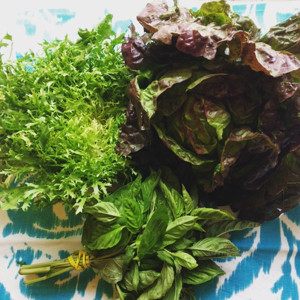 Fit Food Finds: Community Supported Agriculture and Katchkie Farms