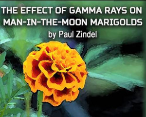 Bridge Street Theatre presents THE EFFECT OF GAMMA RAYS ON THE MAN IN THE MOON MARIGOLDS