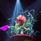 Photo Flash: First Look LITTLE SHOP OF HORRORS at Fulton Theatre Photos