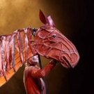 BWW Review: WAR HORSE, The Marlowe Theatre, Canterbury