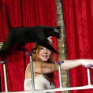 Real, Rescued, Acrobatic Housecats to Perform at NextStop Theatre Company