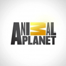 Animal Planet Presents SURVIVING HARVEY: ANIMALS AFTER THE STORM, 9/9