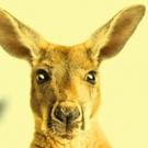Jonathan Biggins' AUSTRALIA DAY Comes to New Theatre Next Month Photo