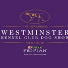 Whippets to Take Over Madison Square Garden for 125th Anniversary of First Competition at Westminster Dog Show