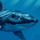 Discovery's SHARK WEEK 2017 to Air in Over 220 Countries Around the World