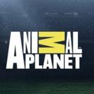 ANIMAL CRIBS with Antonio Ballatore Premieres on Animal Planet Today