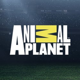Animal Planet Premieres New Series RESCUE DOG TO SUPER DOG, Today