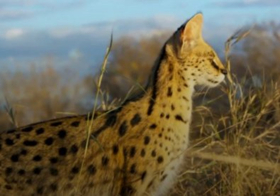 BBC America Earns Record 10 Emmy Nominations for Groundbreaking Documentary Series PLANET EARTH II