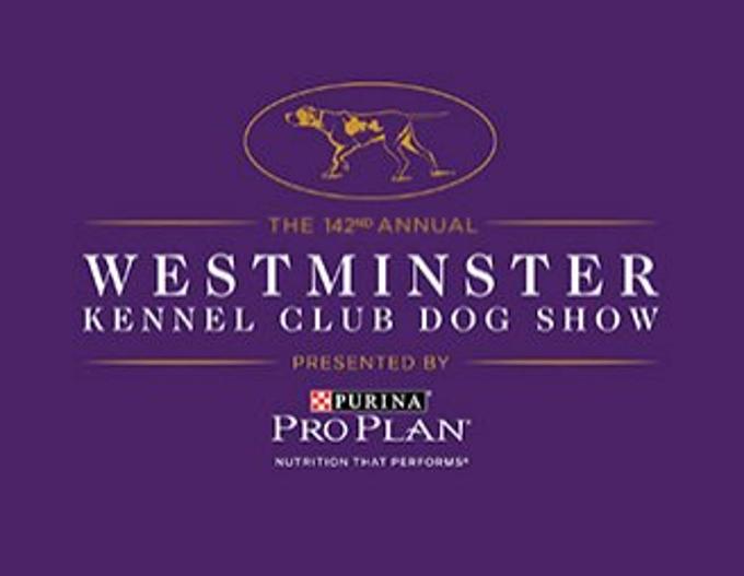 Westminster Dog Show Tv England