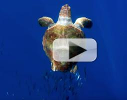VIDEO: First Look - BBC America's PLANET EARTH: BLUE PLANET II Prequel
