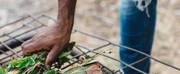 Adelaide Festival Ngarkuadlu - Lets Eat Photo
