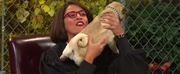 VIDEO: Watch Cecily Strong Preside Over a Dog Court on SNL