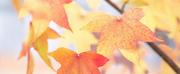 Student Blog: My October Playlist