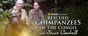CuriosityStream Celebrates World Chimpanzee Day With New Series