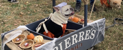 Student Blog: My Favorite NYC Halloween Event, The Halloween Dog Parade