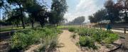 Parks Foundation To Plant LA Park Forest At Hollenbeck ParkAs Part Of City-Wide Envi