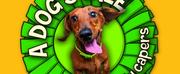 Mikron Theatre Present A DOG\
