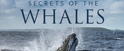 Music From SECRETS OF THE WHALES Available Today Photo