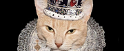 MNMTheatre Company Partners With King Of Cats Theatre Company to Bring Live Theatre