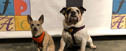 The Franklin Performing Arts Company to Feature Broadway Dogs in LEGALLY BLONDE