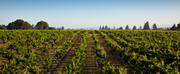 FOPPIANO VINEYARDS Celebrates 125 Years of Wine Production in the Russian River Valley of