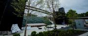 The Munys Iconic Tree Canopy Returns