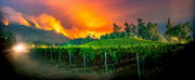 Napa Valley Museum Announces New Virtual Exhibit REAL/TIME: ART OF THE MOMENT – TEST Photo