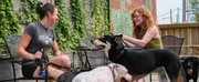 CRAFT HALL Unleashes Philly's Only Dog Park and Beer Garden