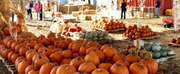 Mr. Jack OLanterns Pumpkin Patch To Open Amidst Coronavirus Pandemic Photo