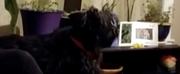 VIDEO: Watch Pablo, a Once-Stray Dog From Italy, Sing Opera Photo
